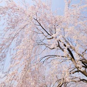 桜公園(玄工山)