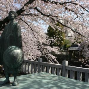 松尾芭蕉と桜